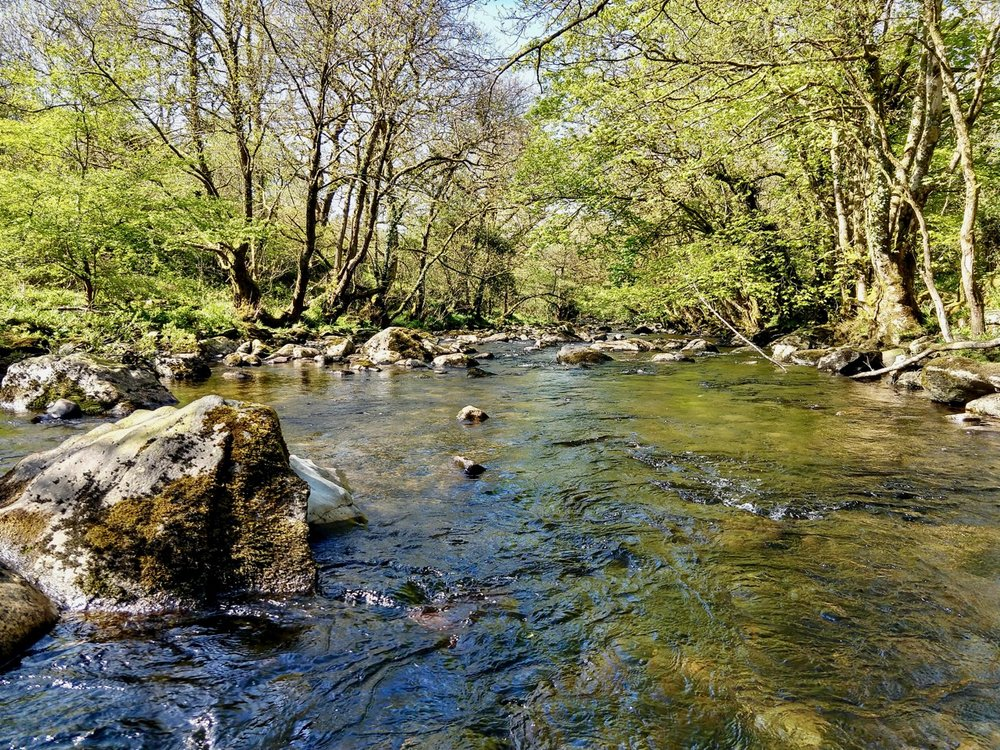 the river tavy -  a 3 minute walk from the Annexe