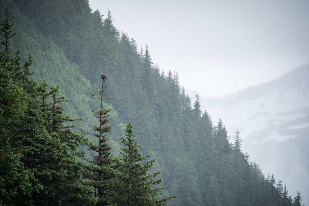 Coastal mountain scene in Alaska