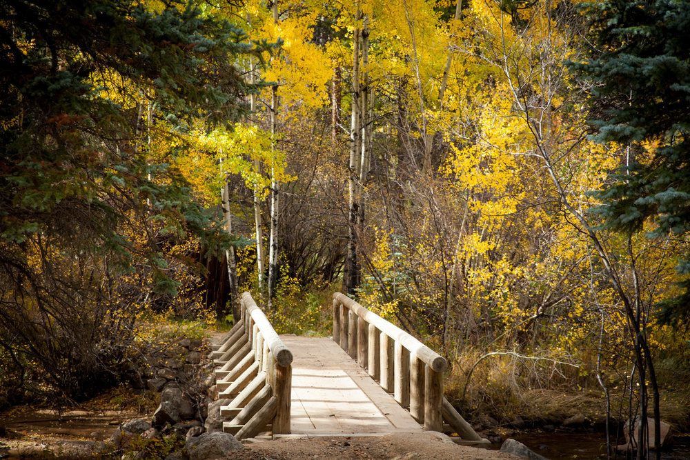 Bridge connecting two trails with fall trees surrounding it