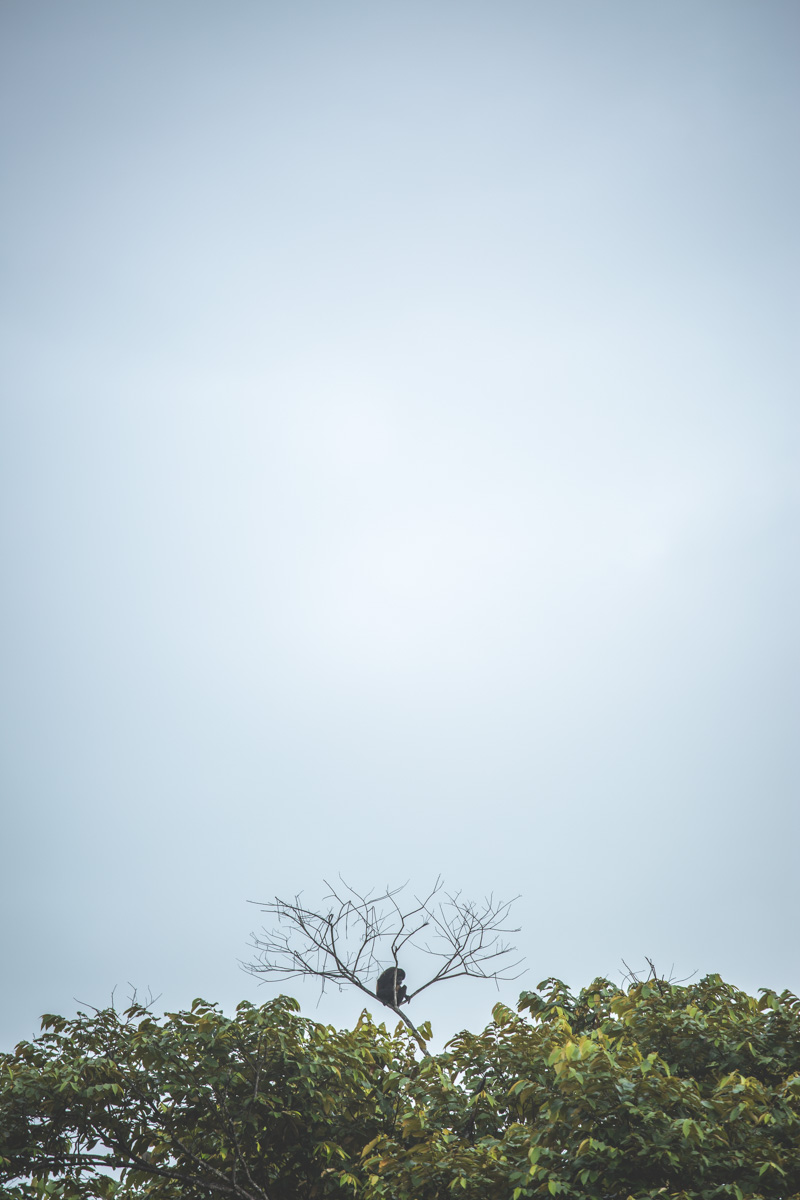 Monkey on the top of a tree at the very bottom with blue skies surrounding it