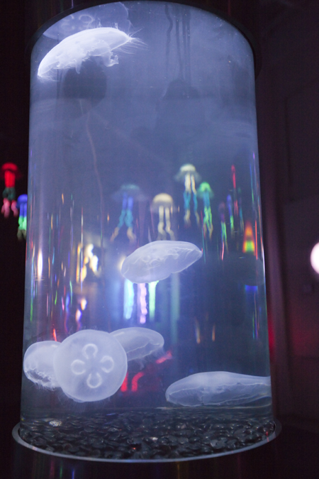 Alex Andon's pieces - real watertank with jellyfish. I took Andy's suggestion and took a picture of the luminous sculptures through the tank - Voila!