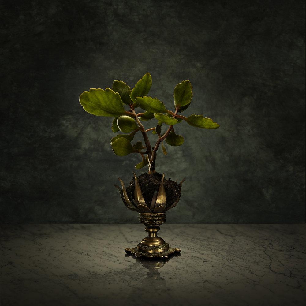 Iron Plant.jpg
