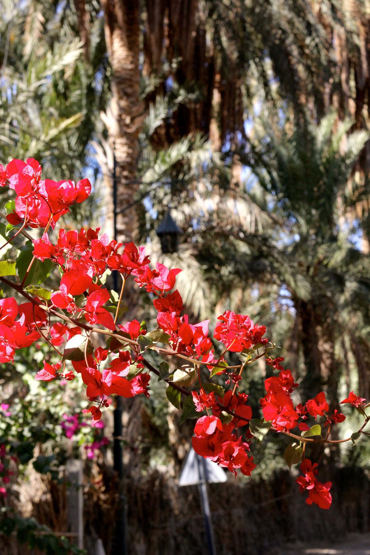 Tunis Red Flowers.jpg