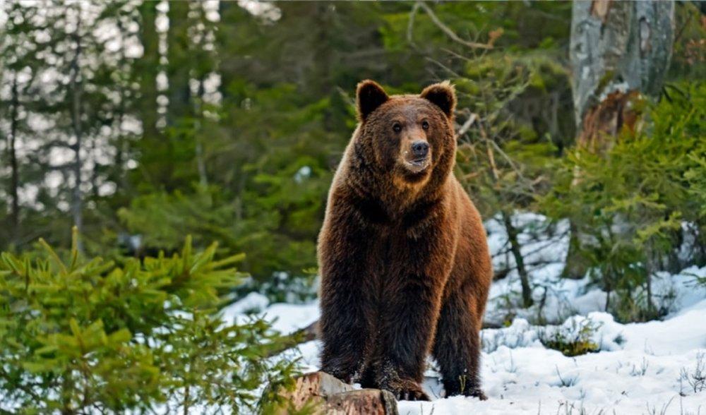 Discovery Big Bear Lake -