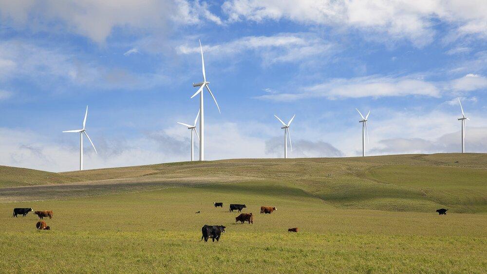 Wind-turbines-cattle-ranch-green-pasture_189766775-2000pxl.jpg