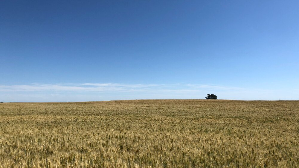 AGRI_Wheat_LasBalas.jpg