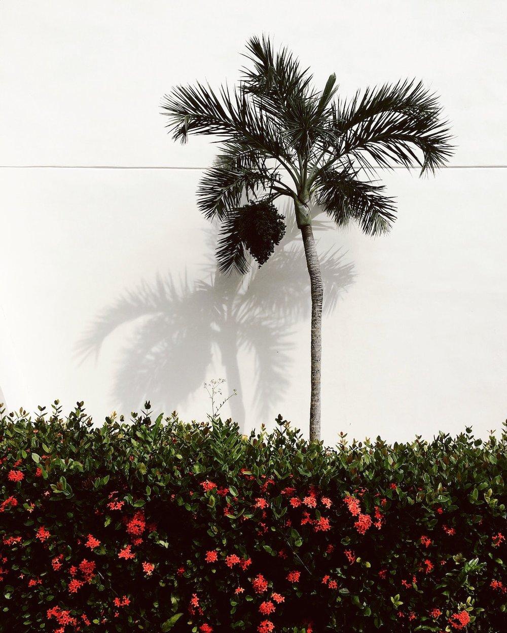 palm tree5.jpg
