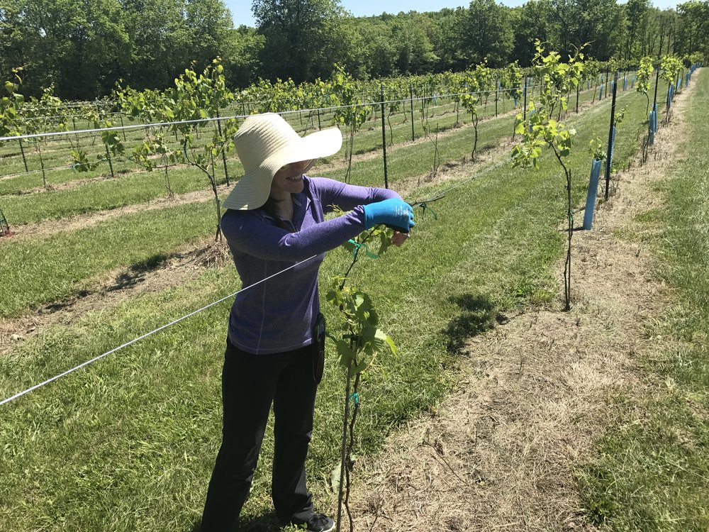 Summer - WE TRAIN VINES AND TIE THEM TO THE TRELLIS