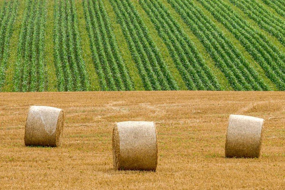Contrasting fields on nearby farmland