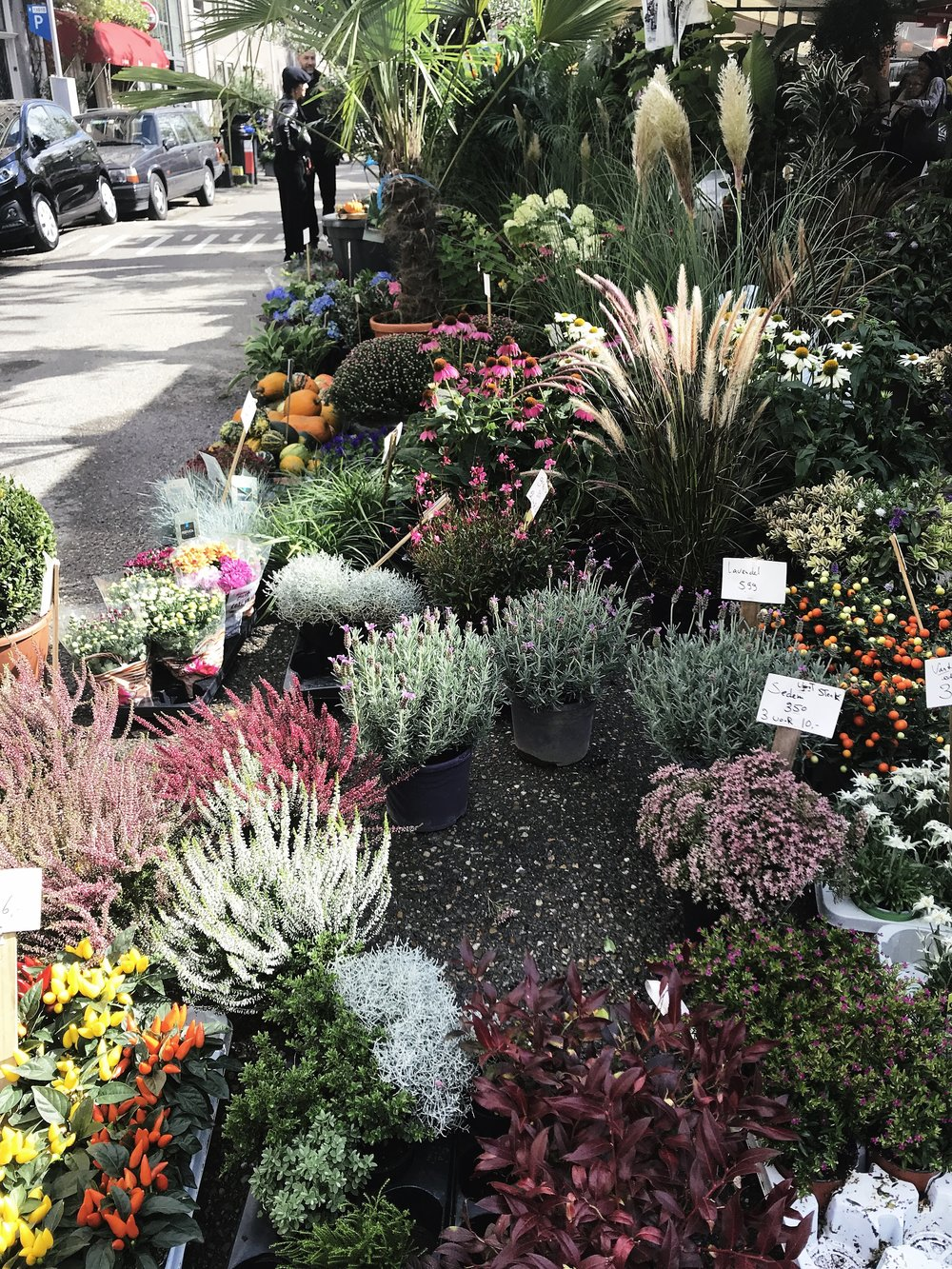 Fresh flowers in Amsterdam
