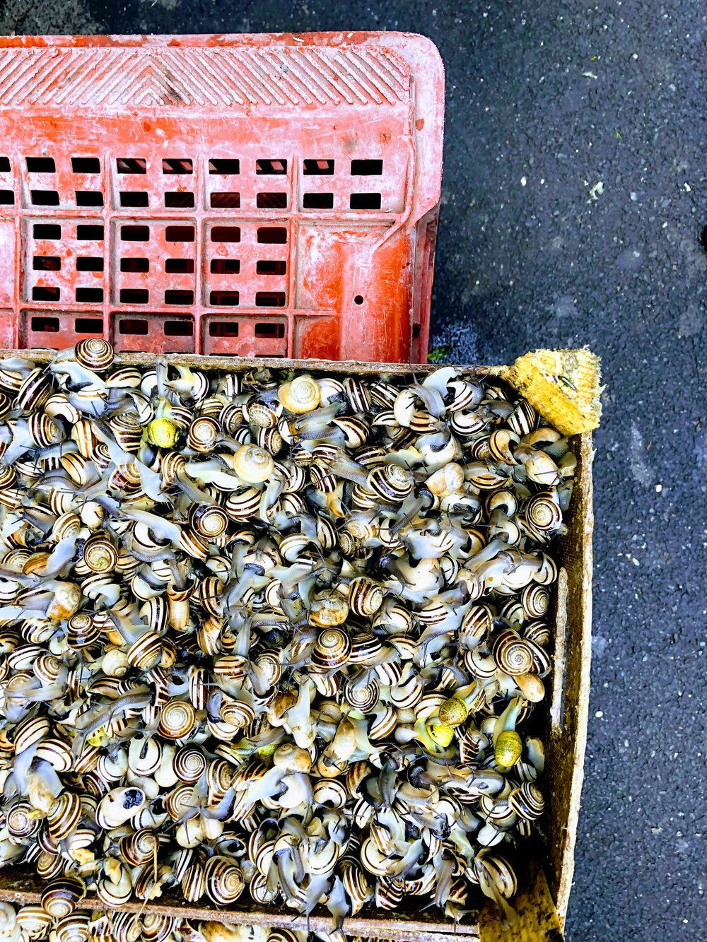 Live snails at the fish market in Catania, Sicily