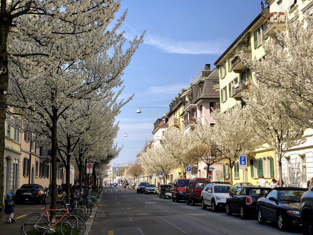 Cherry blossoms in Kreis 4 in the spring in Zurich