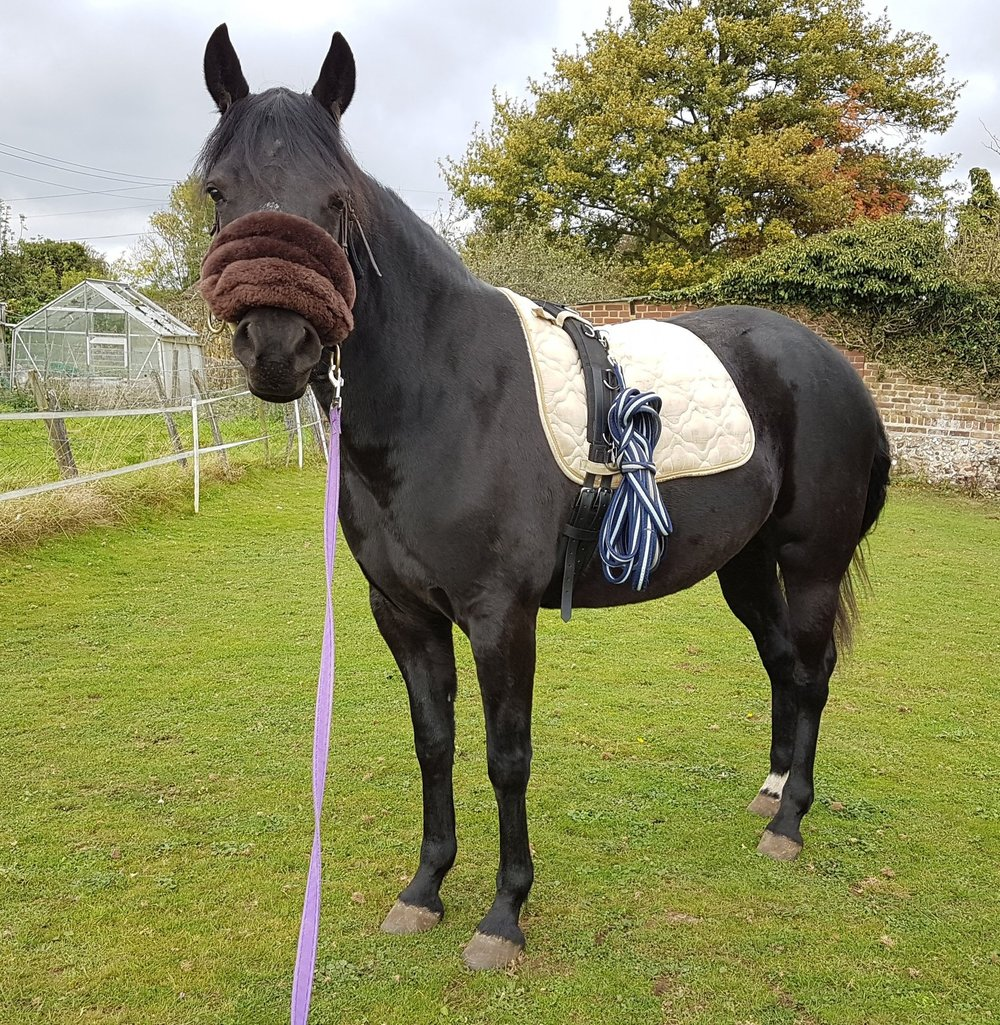 - Suzanne has taken us on a journey from the very first basic ground work to actually riding, and I am looking forward to her guiding us through the adventures to come. I couldn't do without her!- Louise, Kent