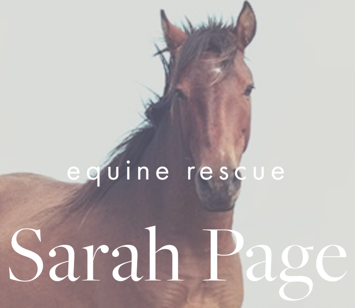 Our History — The Whole Horse Experience & Educational Equine Sanctuary