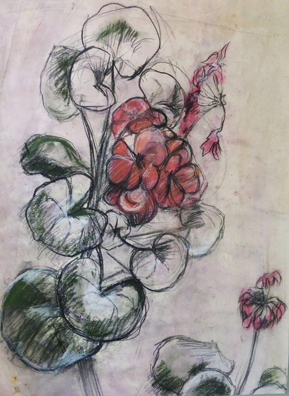 Fiona Edwards - Geranium