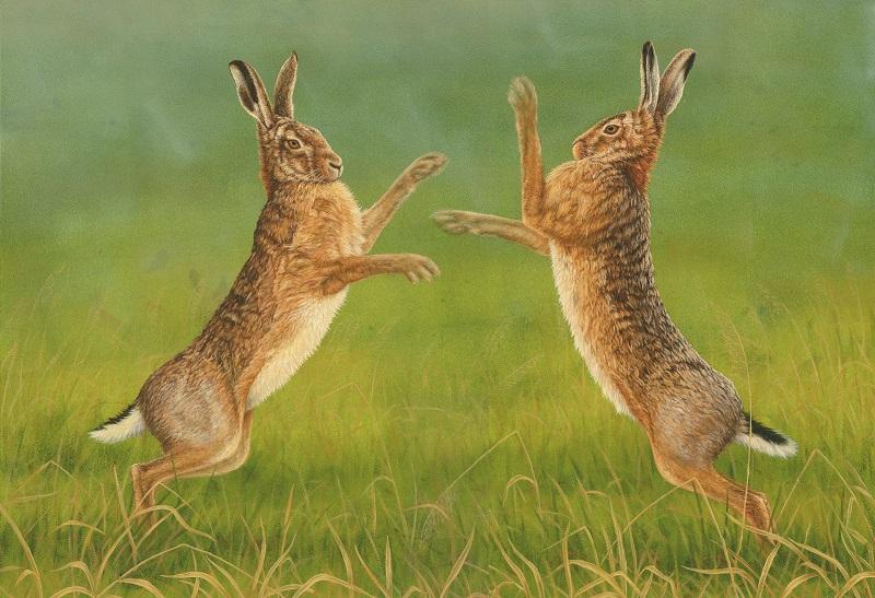 Robert Fuller - Boxing Hares