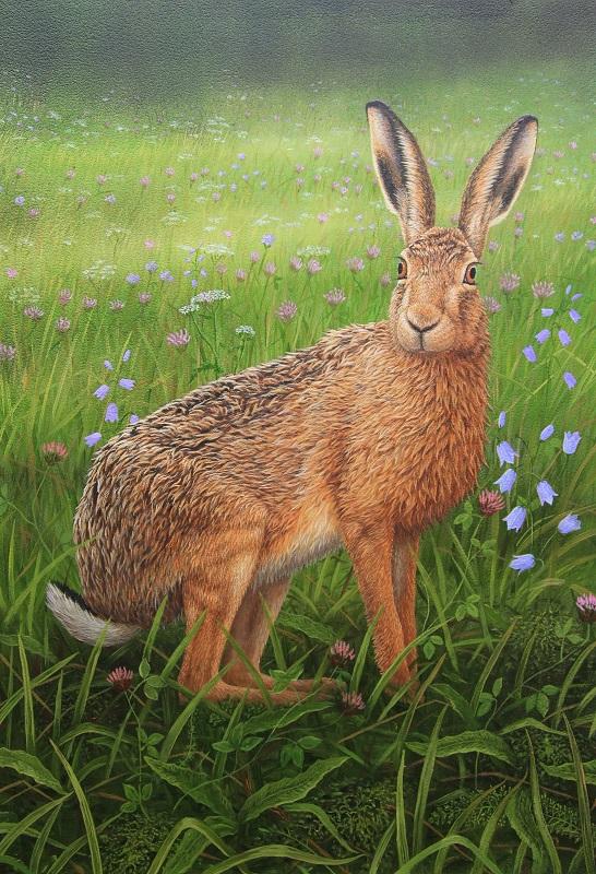 Robert Fuller - Hare in the Wildflowers
