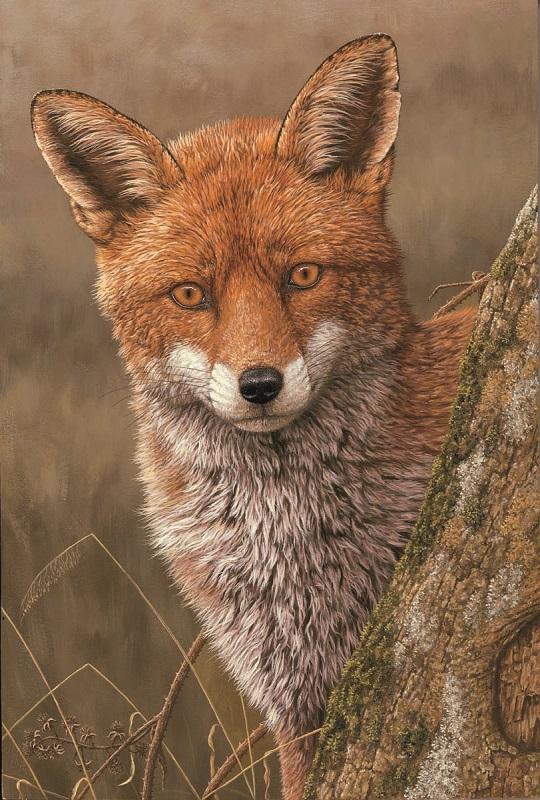 Robert Fuller - Fox at Dawn