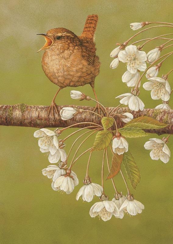 Robert Fuller - Wren with Cherry Blossom
