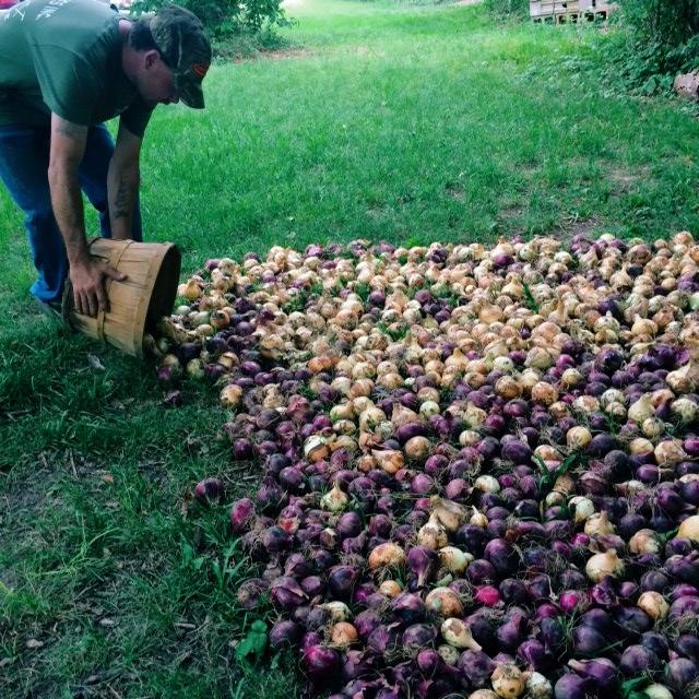 onion dump.JPG