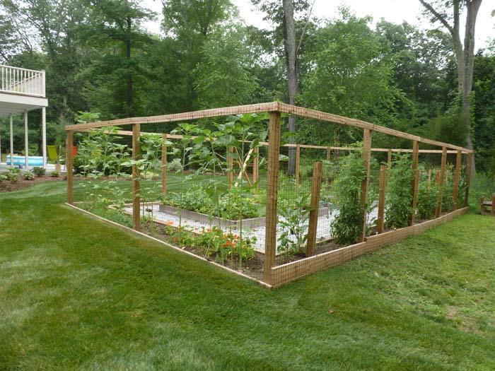 Serre-vegetable garden (7).jpg