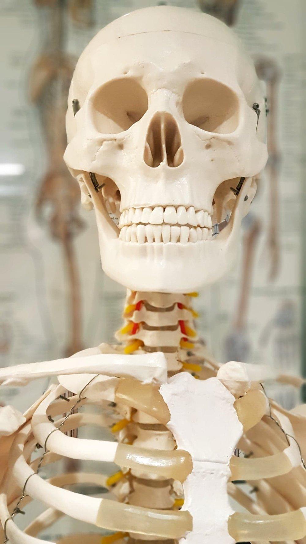 Skeleton 1.jpg