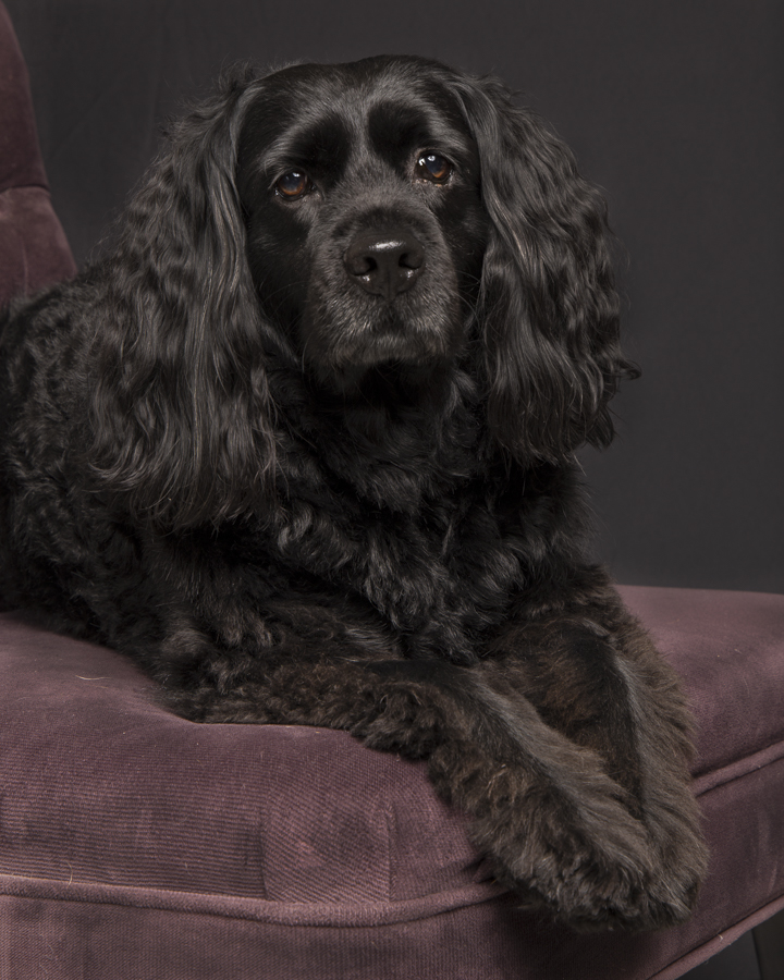 Kim took pictures of my doggie and the results were incredible. My dog was at ease and loved being the center of attention. It was such a fun session. The pictures are beautiful. Saskia looks like a movie star! -