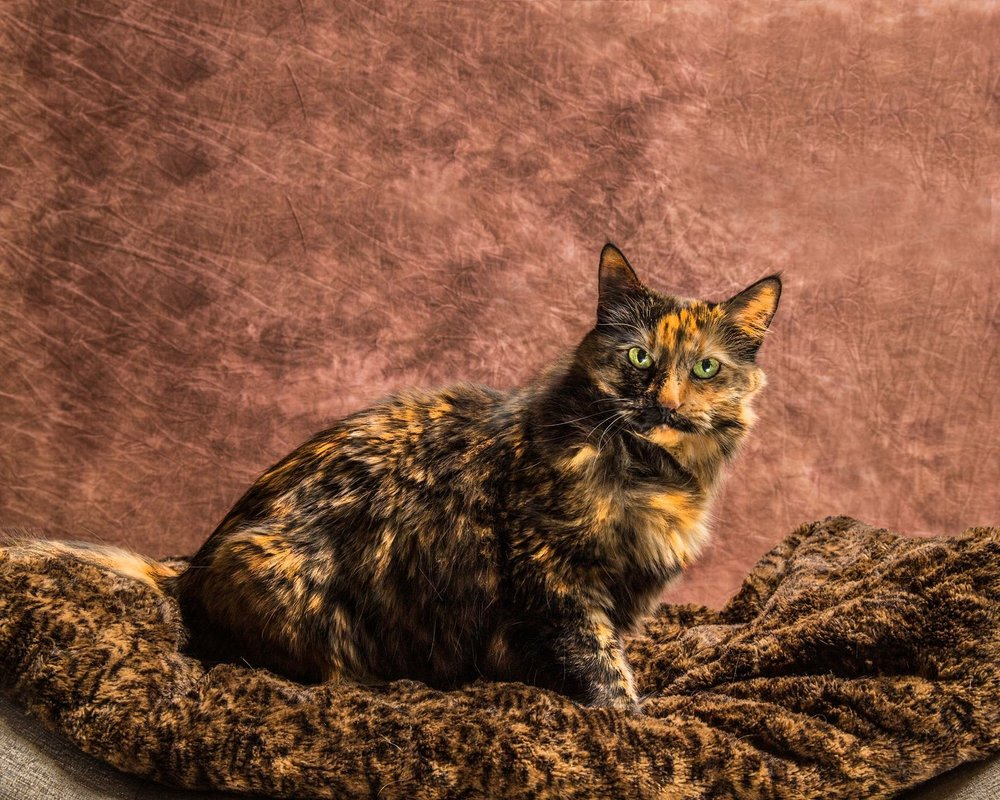 Ms Tonks is patient when taking these pictures. She is gentle and you can tell she loves interacting with them. I would recommend her to take a portrait of your baby. She will not let you down. -