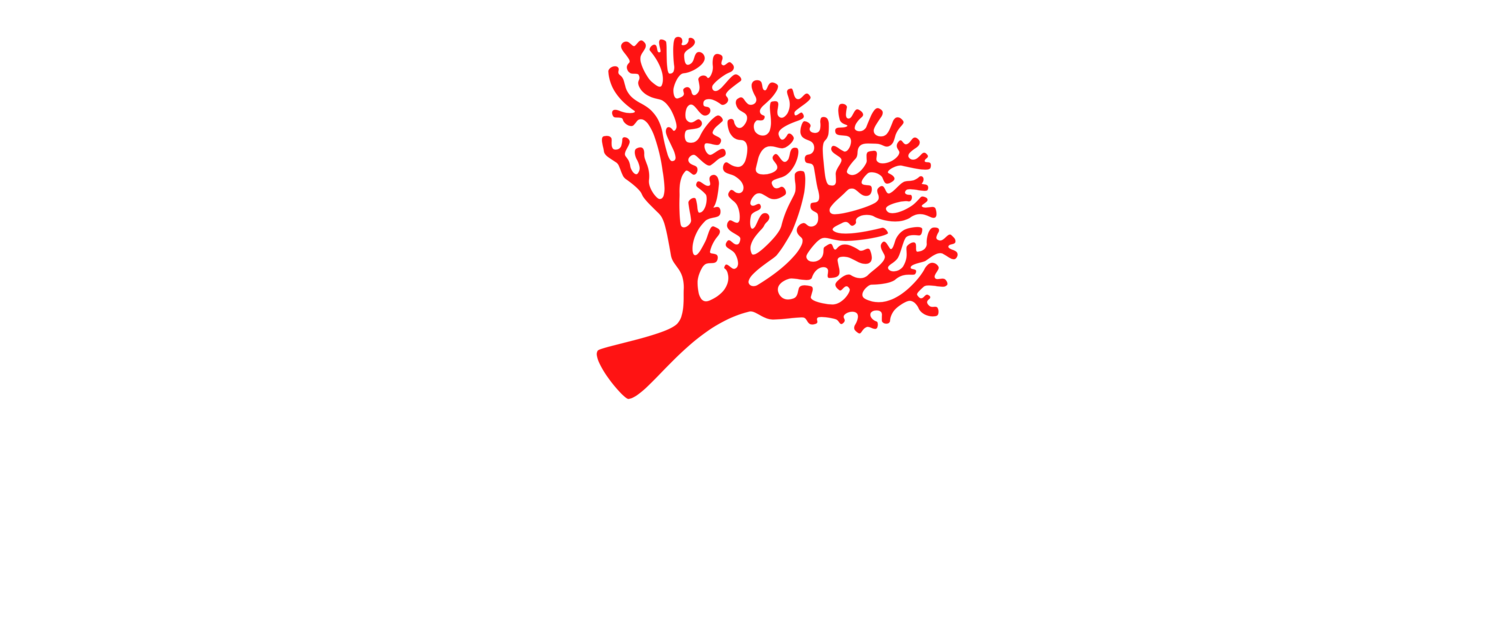 Antilles EcoQuest, Sustainable Touring, St. Thomas, U.S. Virgin Islands