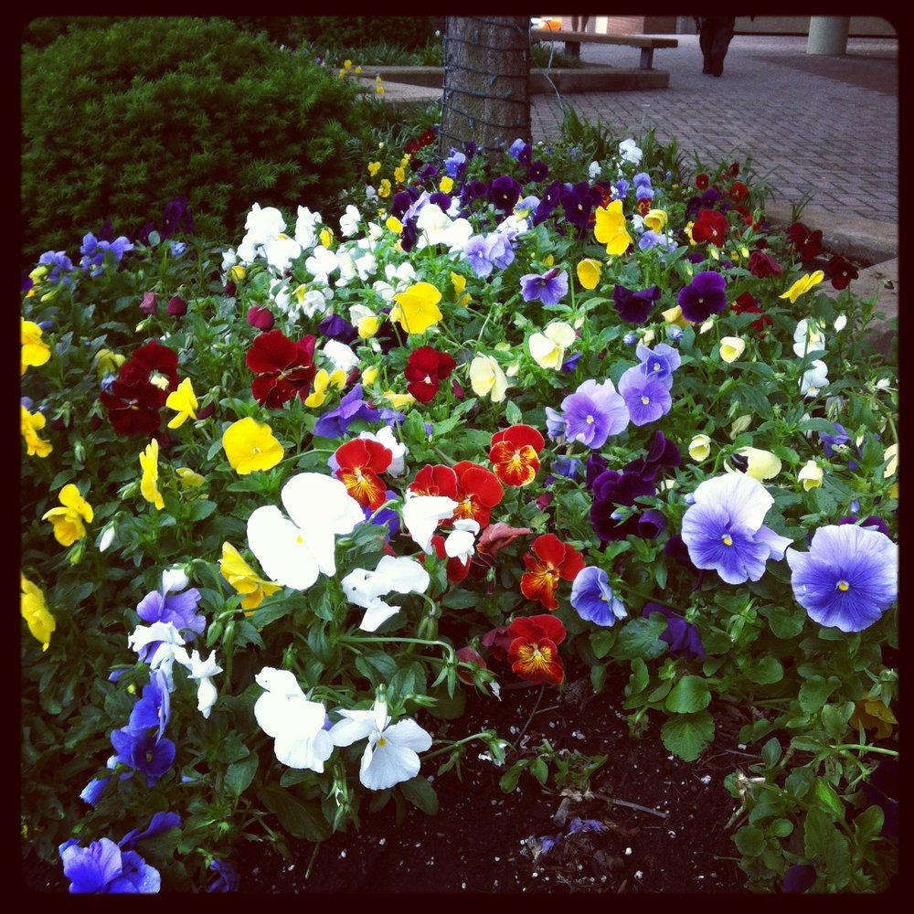 DC has been doing some beautiful landscaping on the city streets.