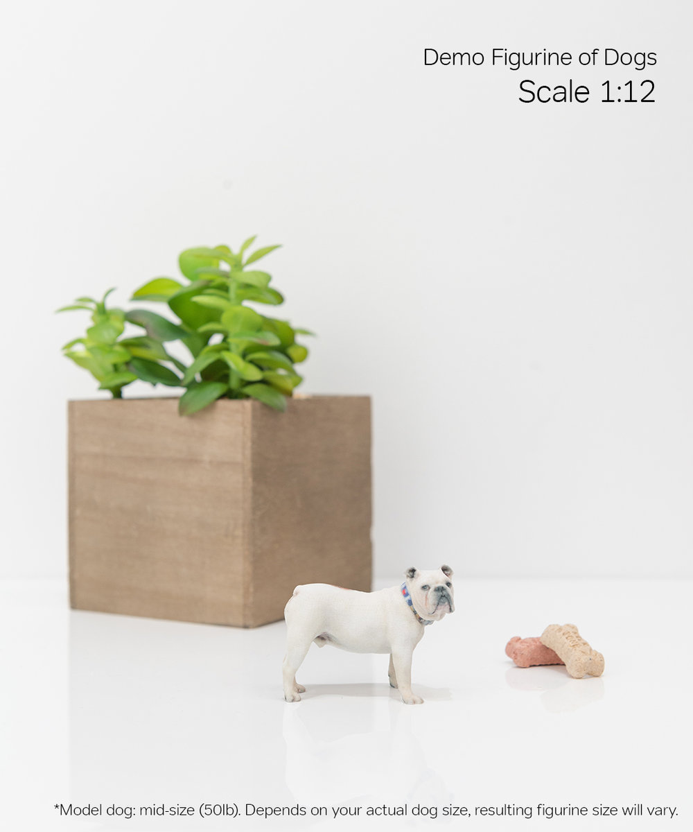 Scale Demo_Dog_2-12.jpg