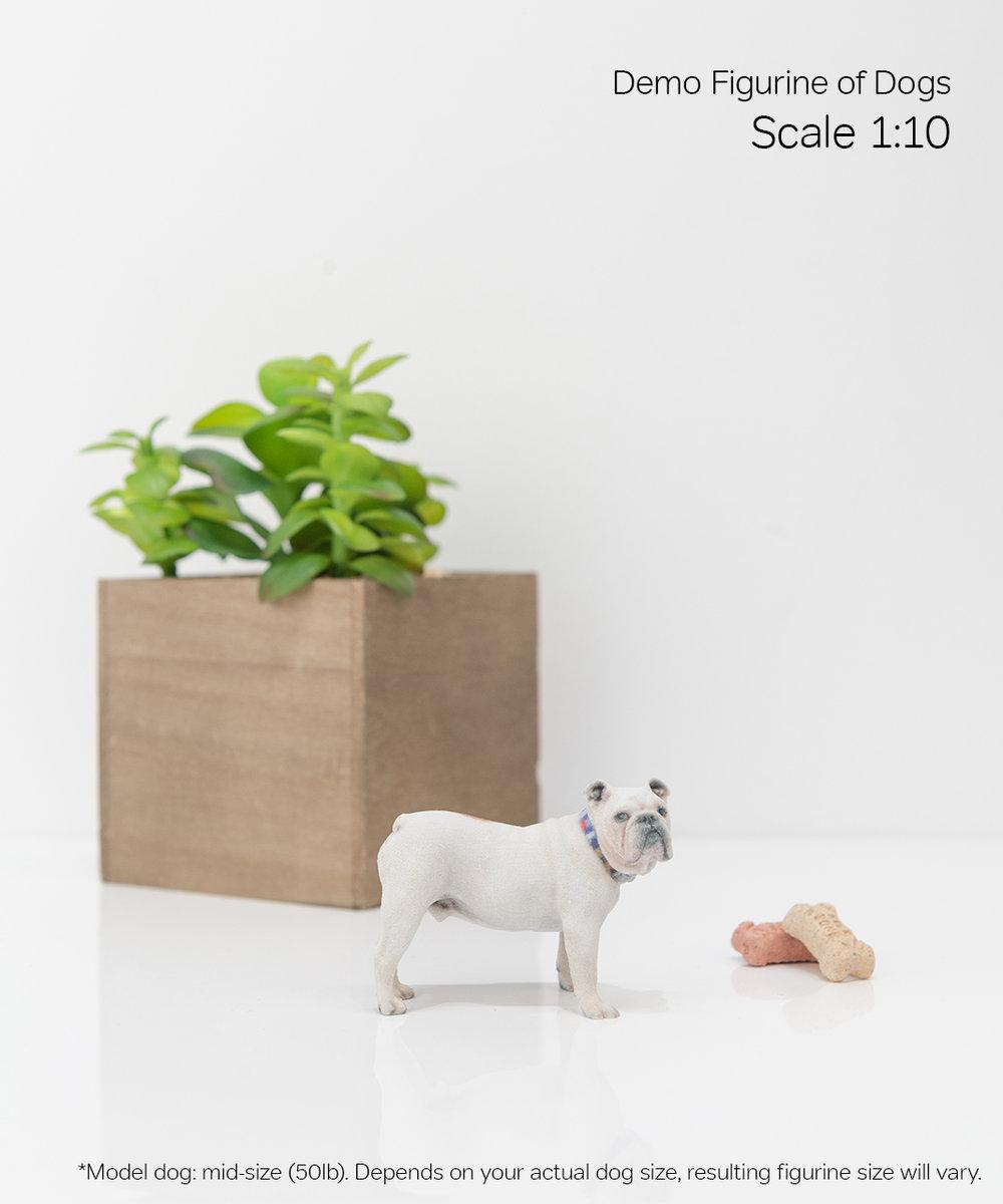 Scale Demo_Dog_3-10.jpg