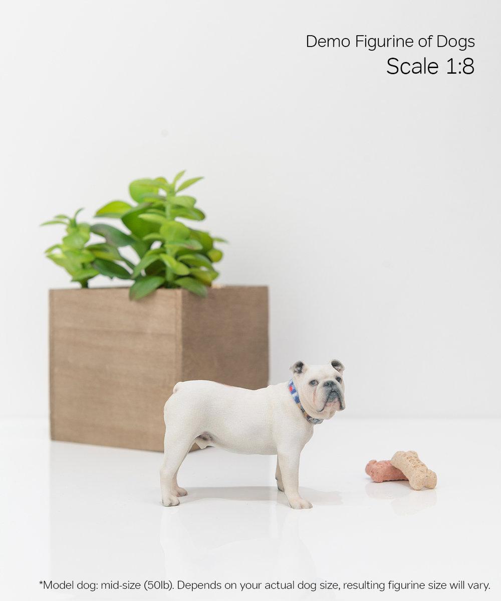 Scale Demo_Dog_5-08.jpg