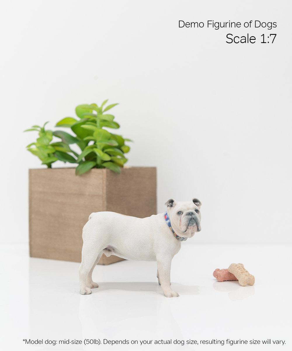 Scale Demo_Dog_6-07.jpg