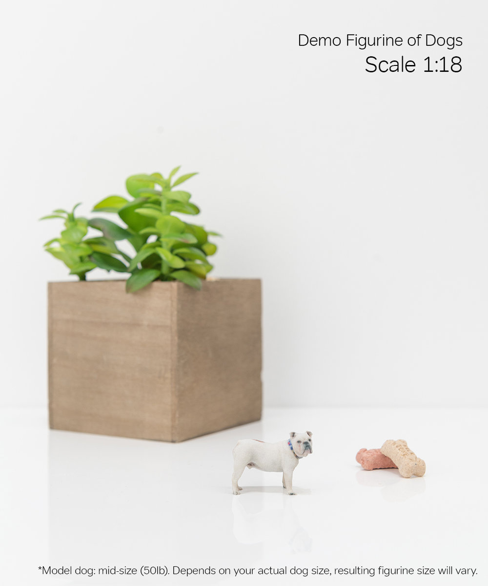 Scale Demo_Dog_1-18.jpg