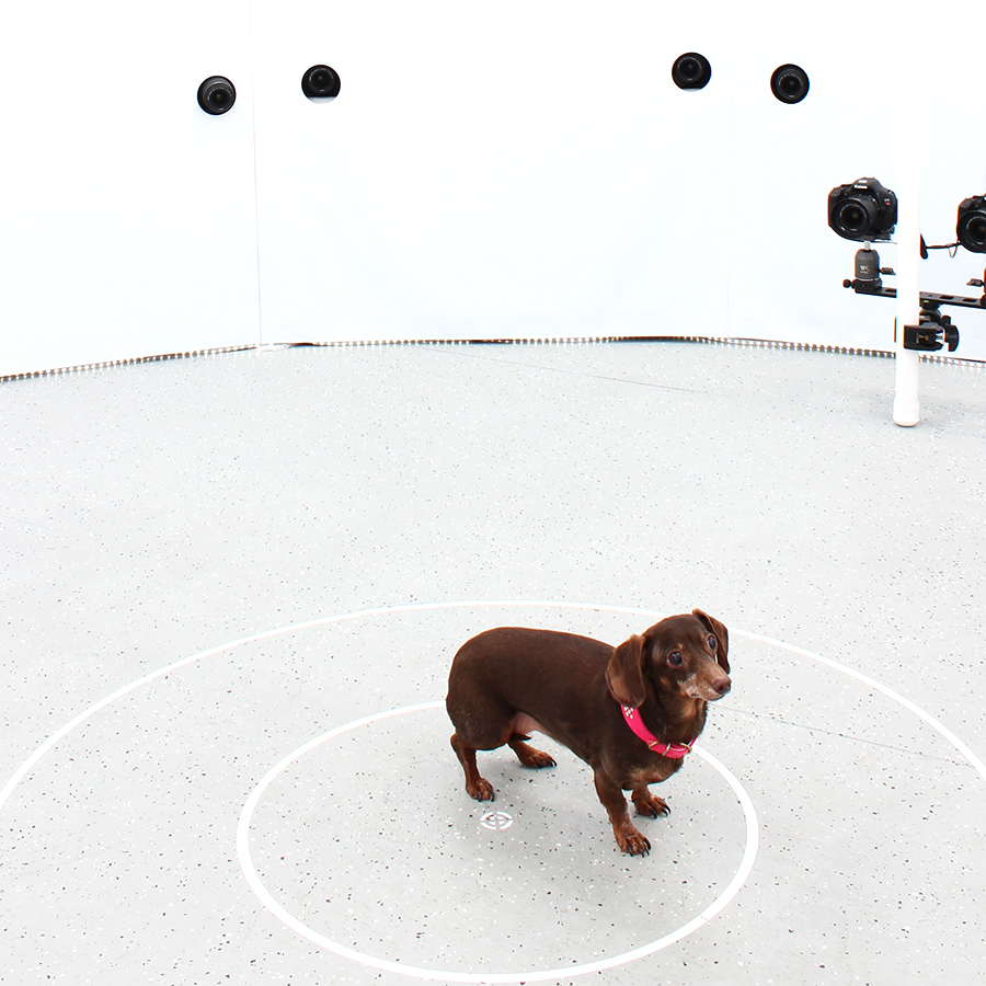 3DBean Gallery_Pet_A02.jpg