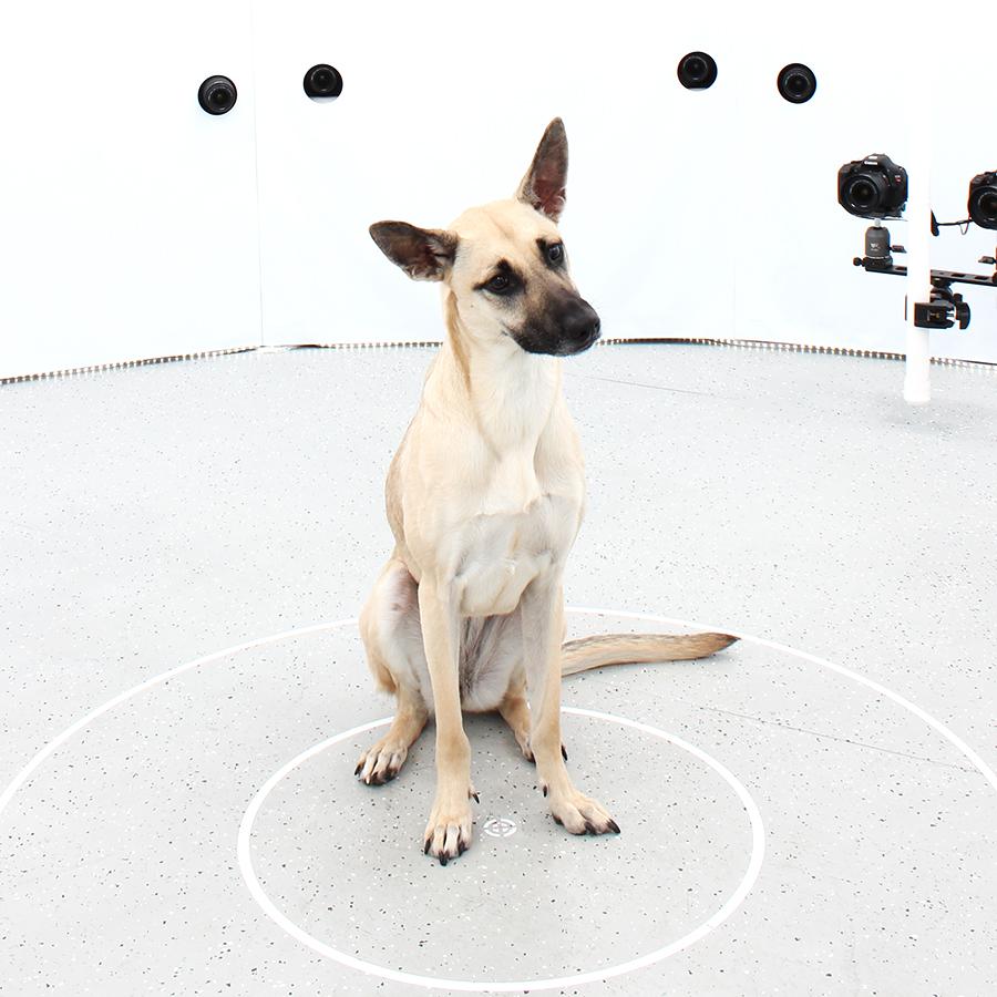 3DBean Gallery_Pet_A03.jpg