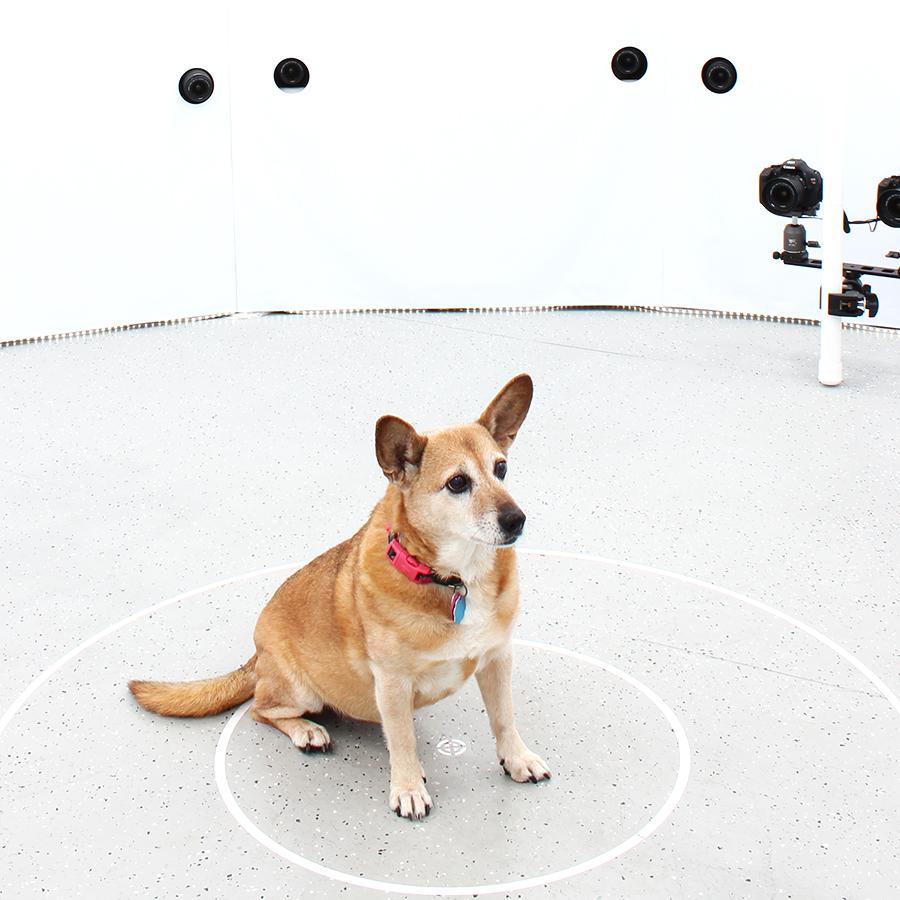 3DBean Gallery_Pet_A04.jpg