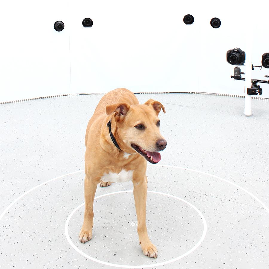 3DBean Gallery_Pet_A05.jpg