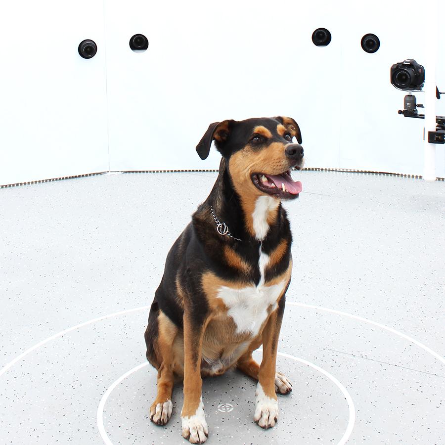 3DBean Gallery_Pet_A11.jpg