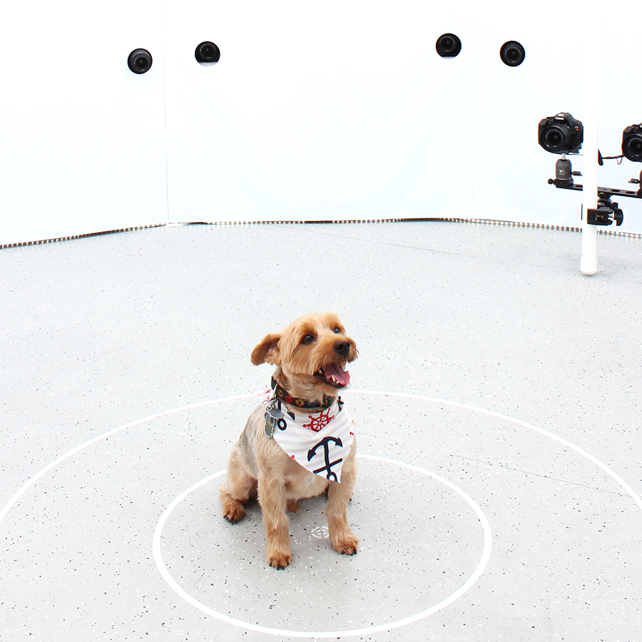 3DBean Gallery_Pet_A15.jpg