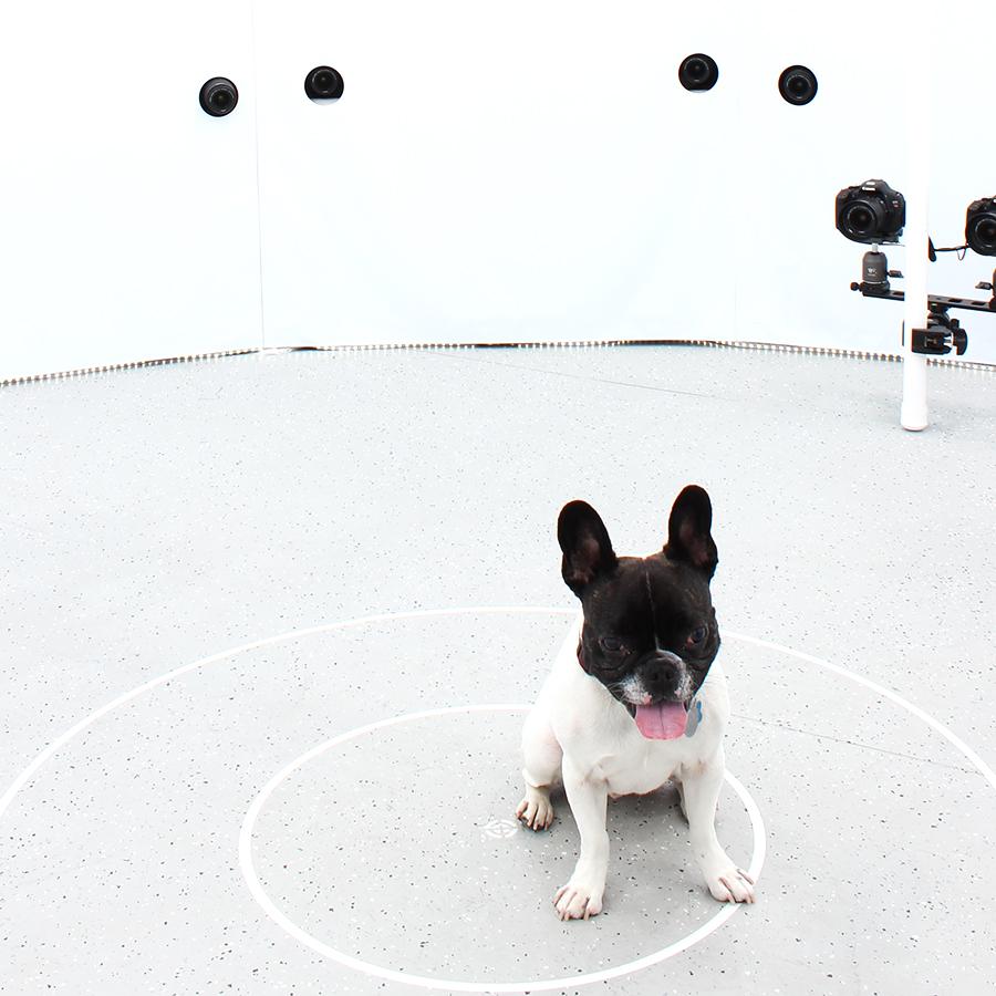 3DBean Gallery_Pet_A16.jpg