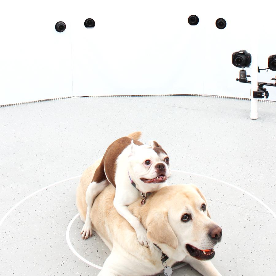 3DBean Gallery_Pet_A17.jpg