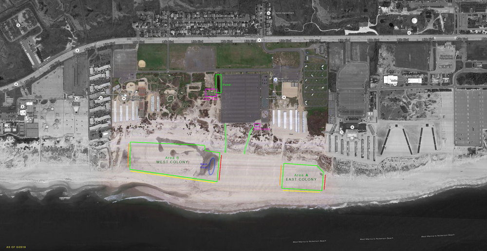 Map of the Nickerson Beach and the nesting colonies