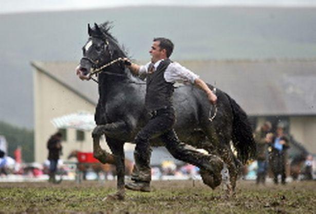 royal-welsh-horses-952693615.jpg