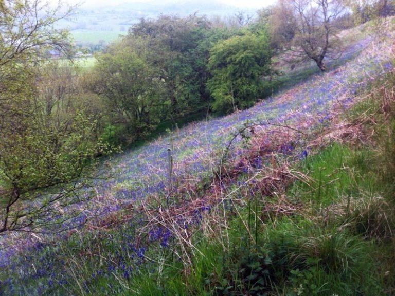 spring-bluebells-768x576.jpg