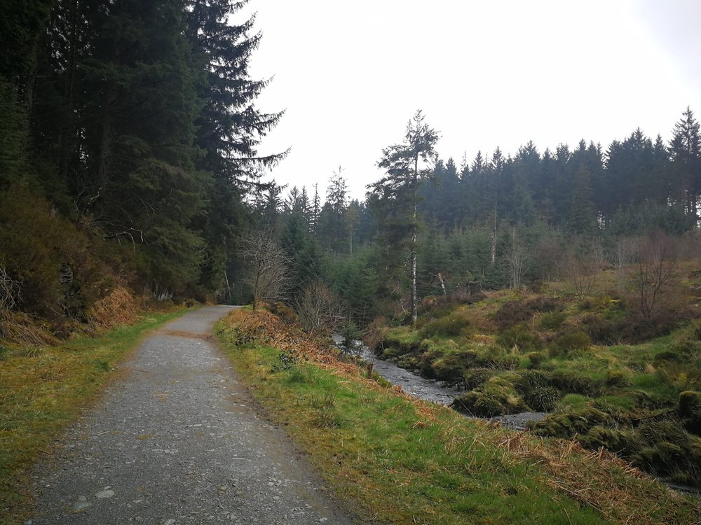 Hafren Forest Walk.jpg