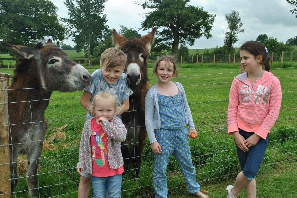 Having fun with the animals in over 40 acres of parkland at Raglan Farm Park