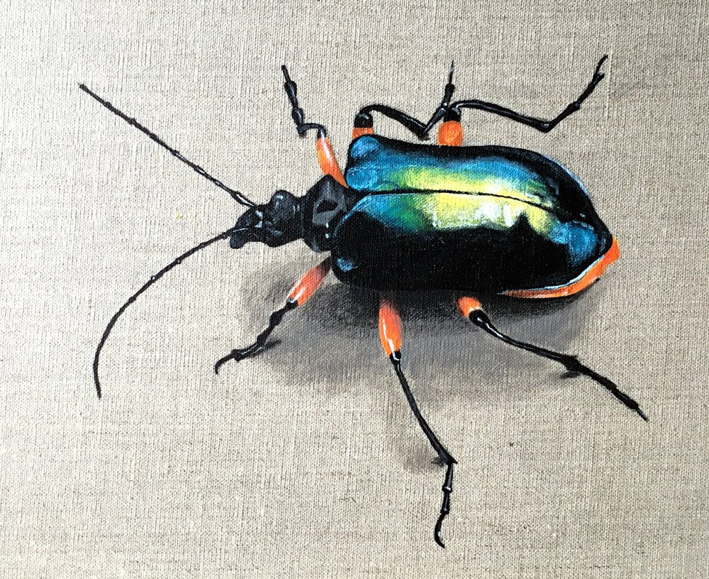Blue & Orange Beetle