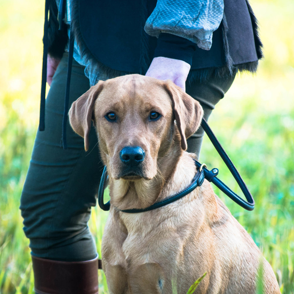 WORKING DOGS - All the accessories you need to ensure your best friends are cared for and spoilt!